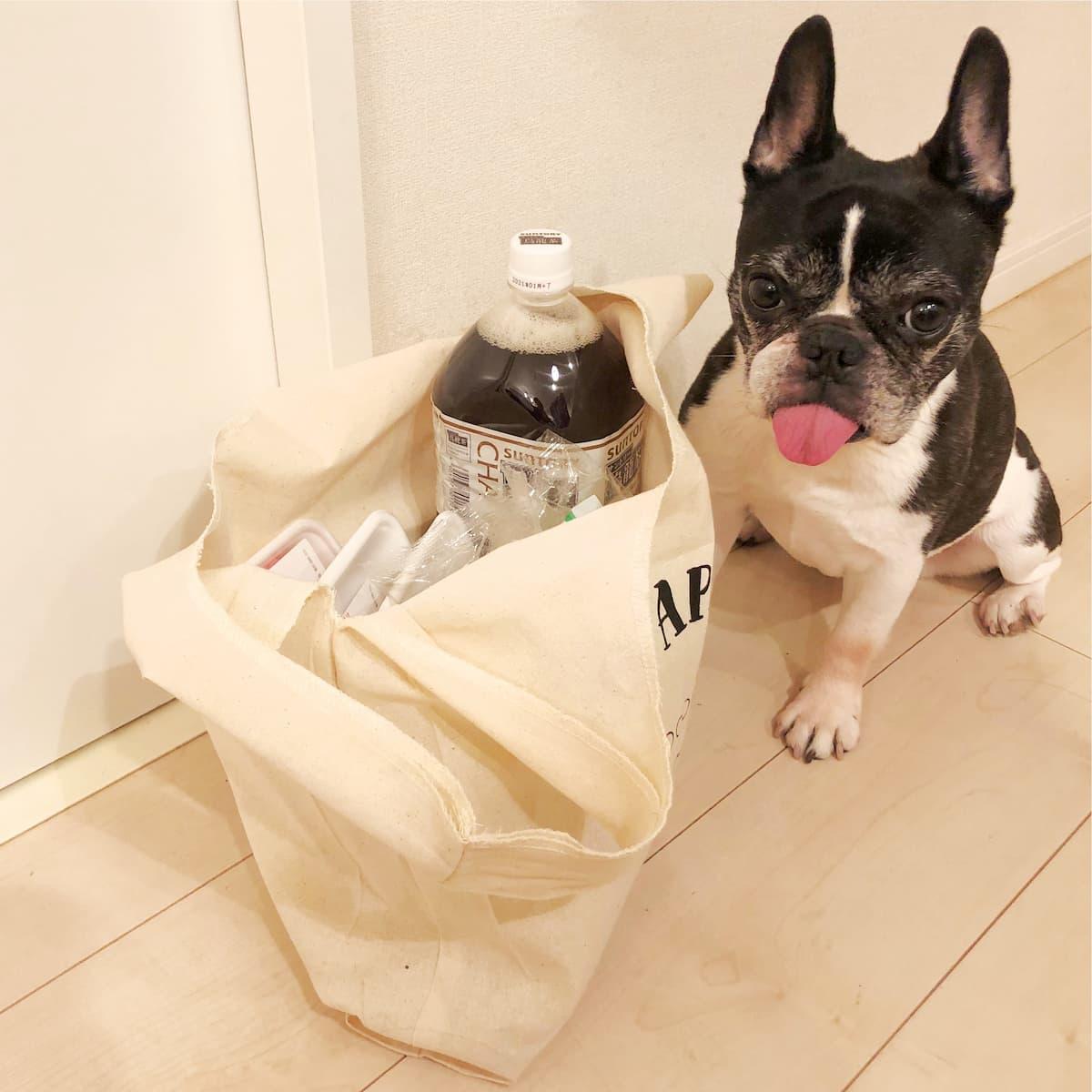 bag_dog.jpg